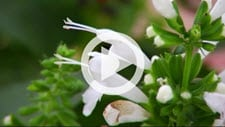 Bulletproof Plants for Novice Gardeners Video